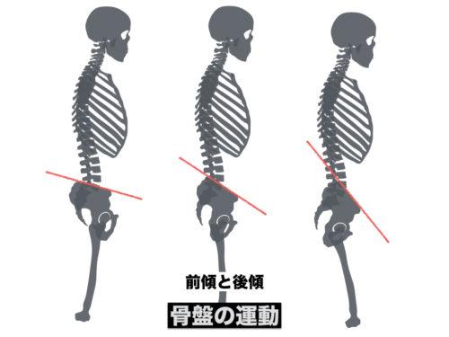 骨盤の前後傾の図