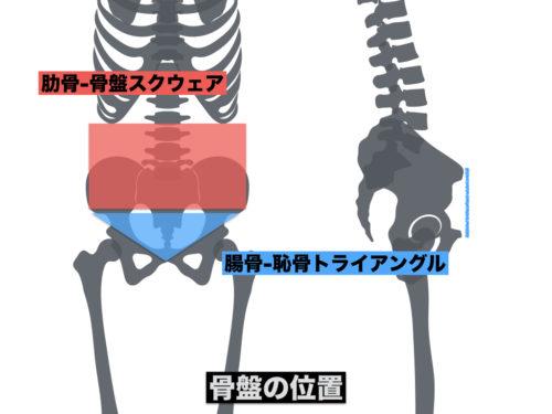 骨盤の位置の図